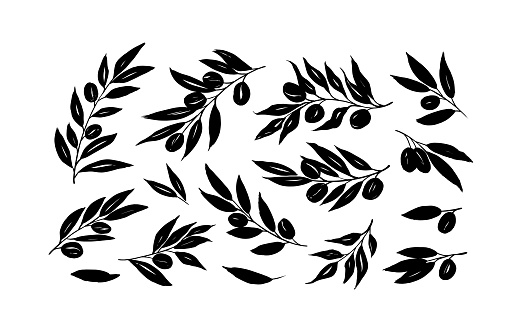 Olive branches with long leaves vector collection. Set of black silhouettes leaves and tree branches.