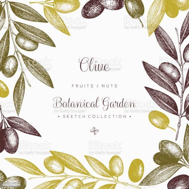 Olive card design vector id646203658?b=1&k=6&m=646203658&s=612x612&h=mjn2g76bk27xdhqsrqcqzt u7wt9c4aj2wovg9i3 rw=