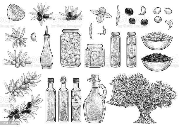Olive collection illustration drawing engraving ink line art vector vector id924131326?b=1&k=6&m=924131326&s=612x612&h=febchfvlh 0wvutrldji4hs8b3xmhb0g01zvkhzpg s=