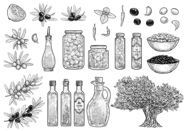 Olive collection illustration, drawing, engraving, ink, line art, vector Illustration, what made by ink, then it was digitalized. vinegar stock illustrations
