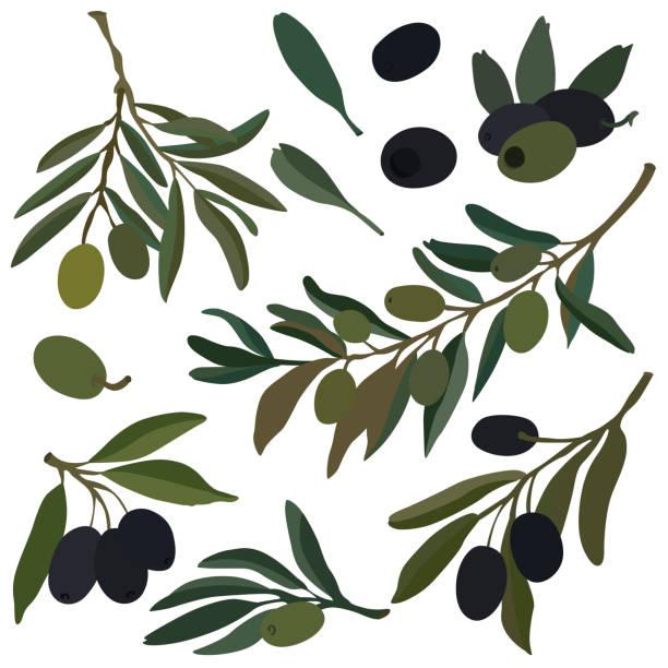 Olive colored illustration, vector Olive colored illustration, vector olive branch stock illustrations