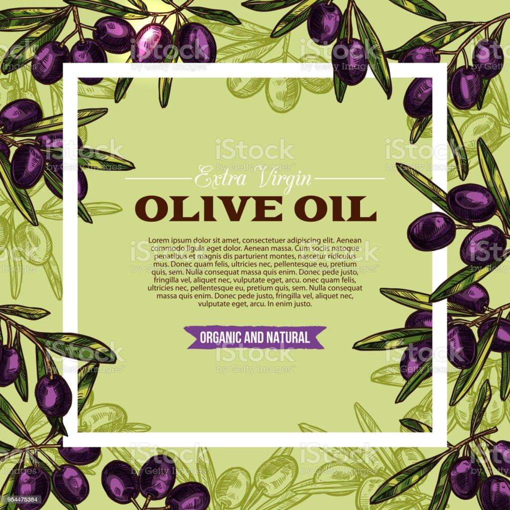 Olive fruit sketch frame of extra virgin oil label vector art illustration