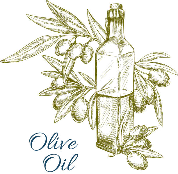 olivenöl-flasche und oliven zweig-vektor-skizze - dressing stock-grafiken, -clipart, -cartoons und -symbole