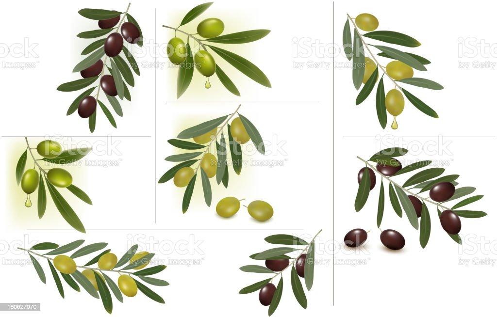 Olive Set vector art illustration