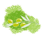 Olive tree branch sketch illustration with green watercolor spot. Hand drawn vector illustration.