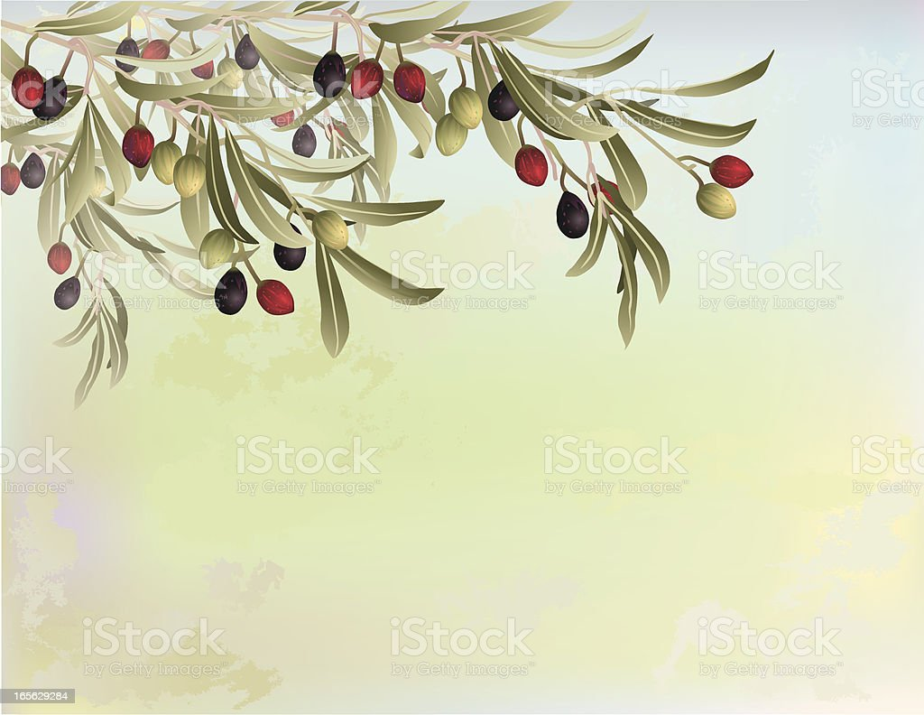 Olive tree branches on abstract background royalty-free stock vector art