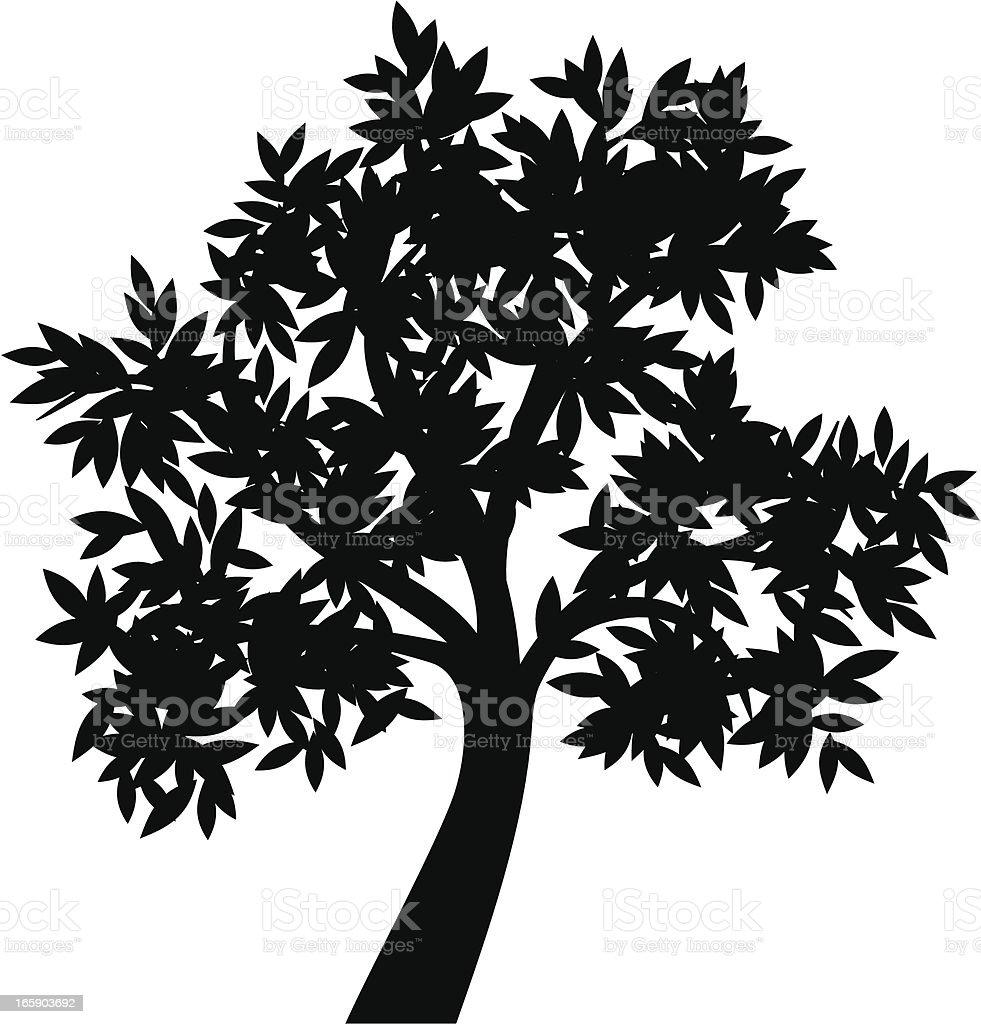 Olive tree II vector art illustration