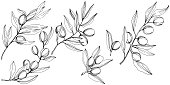 Olive tree in a vector style isolated. Black and white engraved ink art. Branches of an olive tree. Vector olive tree for background, texture, wrapper pattern, frame or border.
