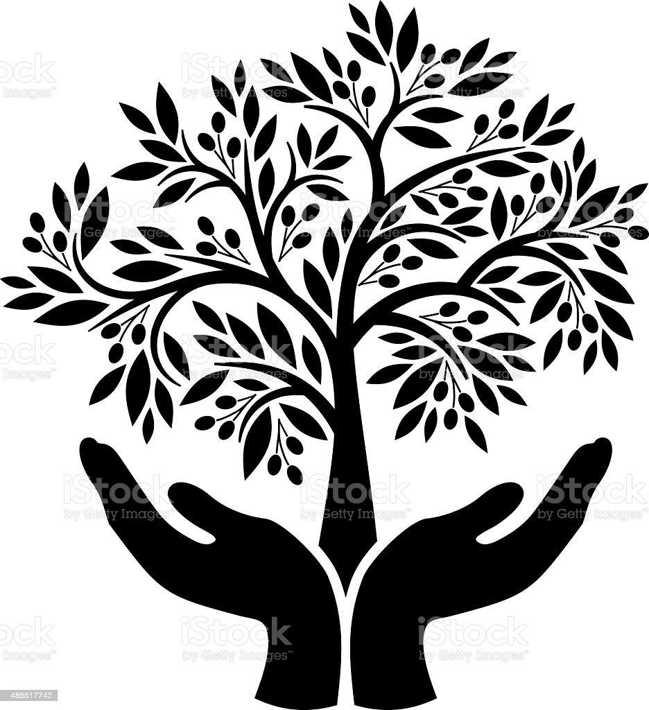 Olive tree in hands vector art illustration