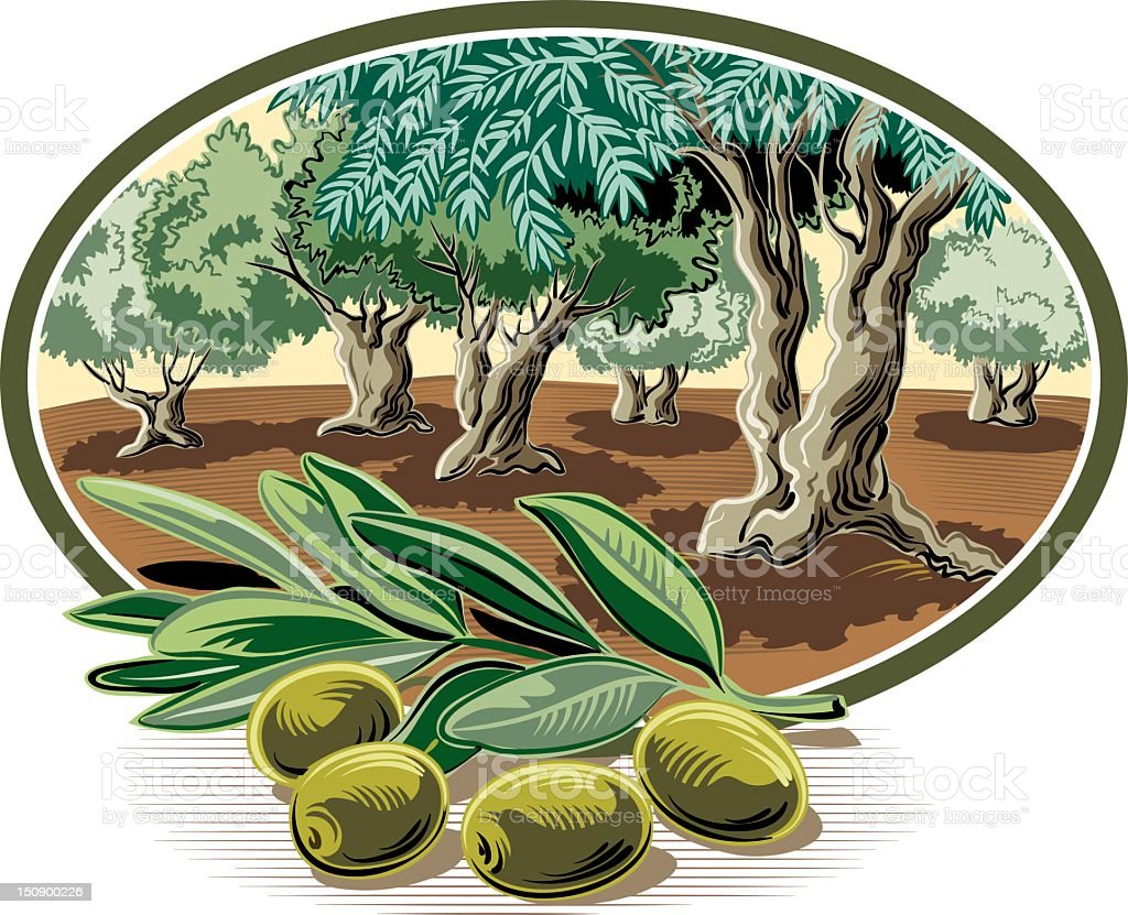 olive tree in oval frame vector art illustration