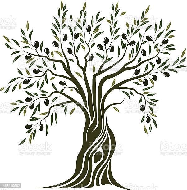 Olive tree vector id466410562?b=1&k=6&m=466410562&s=612x612&h=tcgm8edhjgrnh340keikfgmgt17tjhb8oaznpu4ejbe=