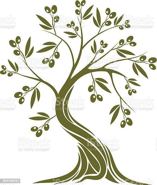 Olive tree vector id534265257?b=1&k=6&m=534265257&s=612x612&h=qji nwnsn5rqjmstpoawdj32z0hc435poom2k25euii=