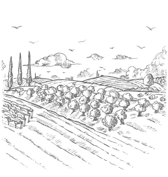 Olive trees garden. Hand drawn vector illustration vector art illustration