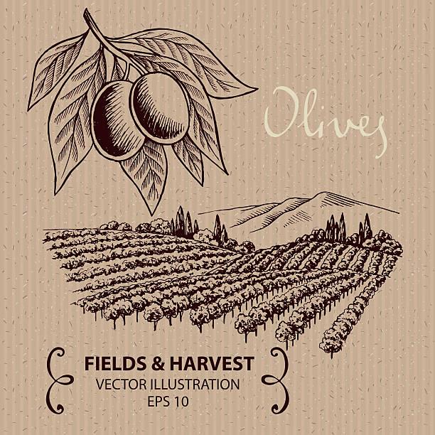 olivenbäume - toskana stock-grafiken, -clipart, -cartoons und -symbole