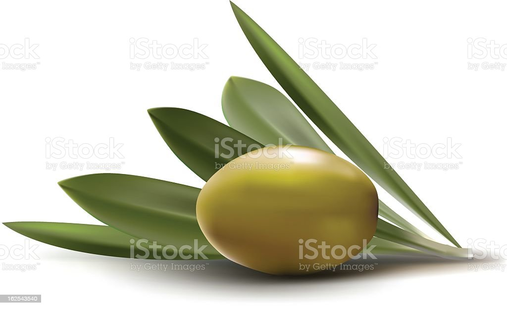 olive vector art illustration