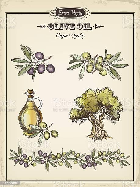 Olive vector id457728971?b=1&k=6&m=457728971&s=612x612&h=1eqetnbolj0duwxiyelfbpfsvjnmpca5kw99fzjjqf4=