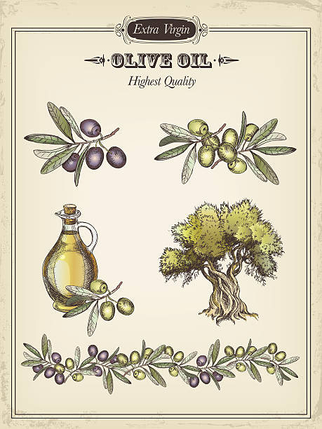 illustrations, cliparts, dessins animés et icônes de olive - olivier
