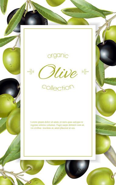 ilustrações de stock, clip art, desenhos animados e ícones de olive vertical banner - mediterranean food