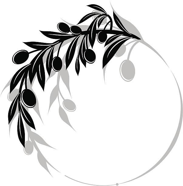 Olives Branch Swirl Design Element Olives Branch Swirl Design Element olive branch stock illustrations