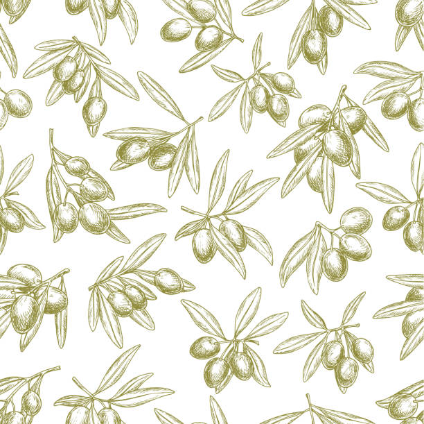 Olives branches on olive vector seamless pattern Olives seamless pattern of vector sketch olive branches and fruits. Tracery of green olives harvest for Italian cuisine design or extra virgin oil food or cosmetic product packaging wrapper olives stock illustrations