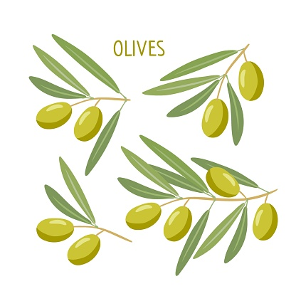 Olives branches set. Branch with olives and leaves isolated on white. Vegetable for the Mediterranean or vegan diet. Flat design style for menu, cafe, restaurant, poster, banner, label, sticker
