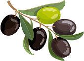 Olives bunch logo. Green and black olives branche vector illustration.
