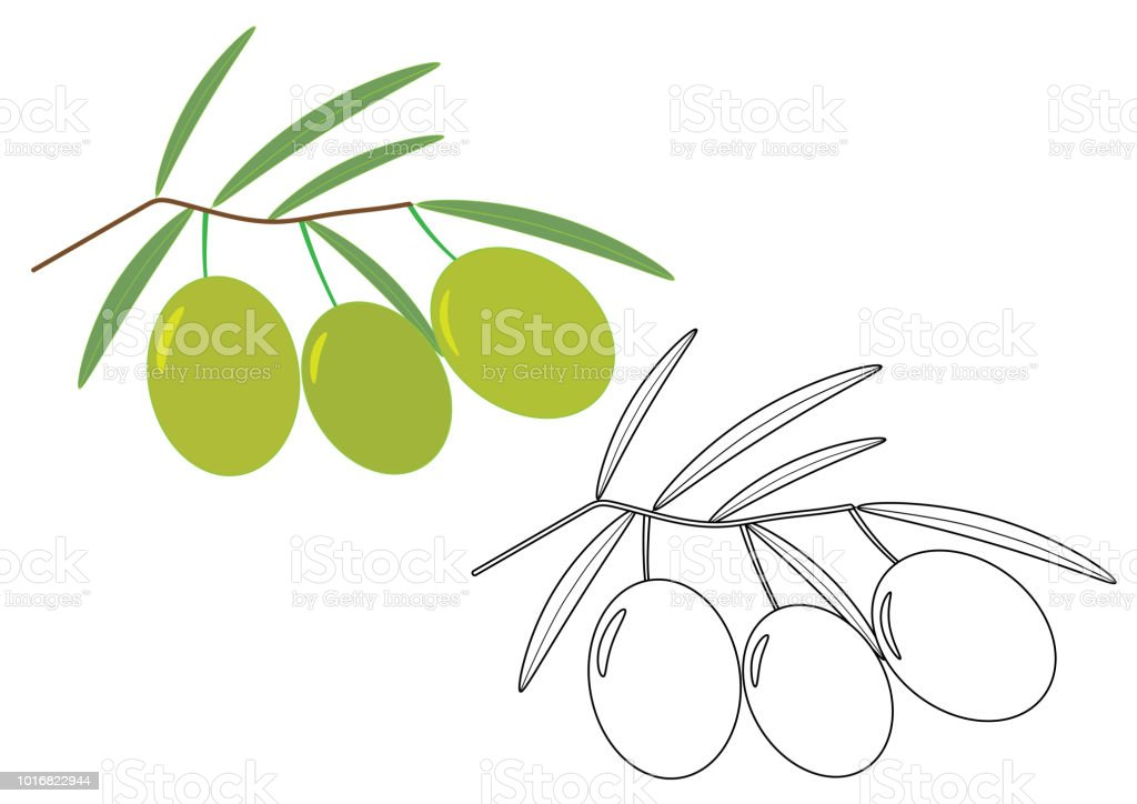 Coloriage Arbre Dolive.Olives Coloriage Illustration Vectorielle Vecteurs Libres De