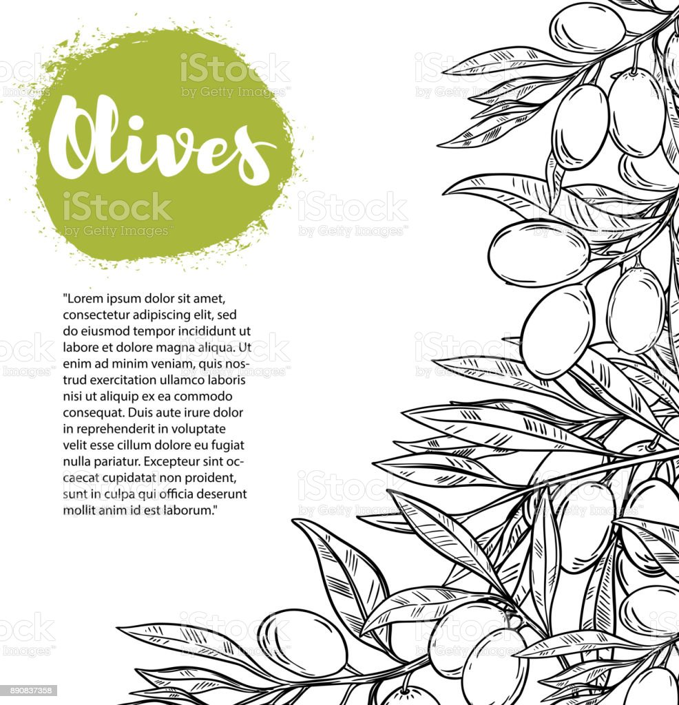 Olives. Flyer template with border from olive branch. vector art illustration