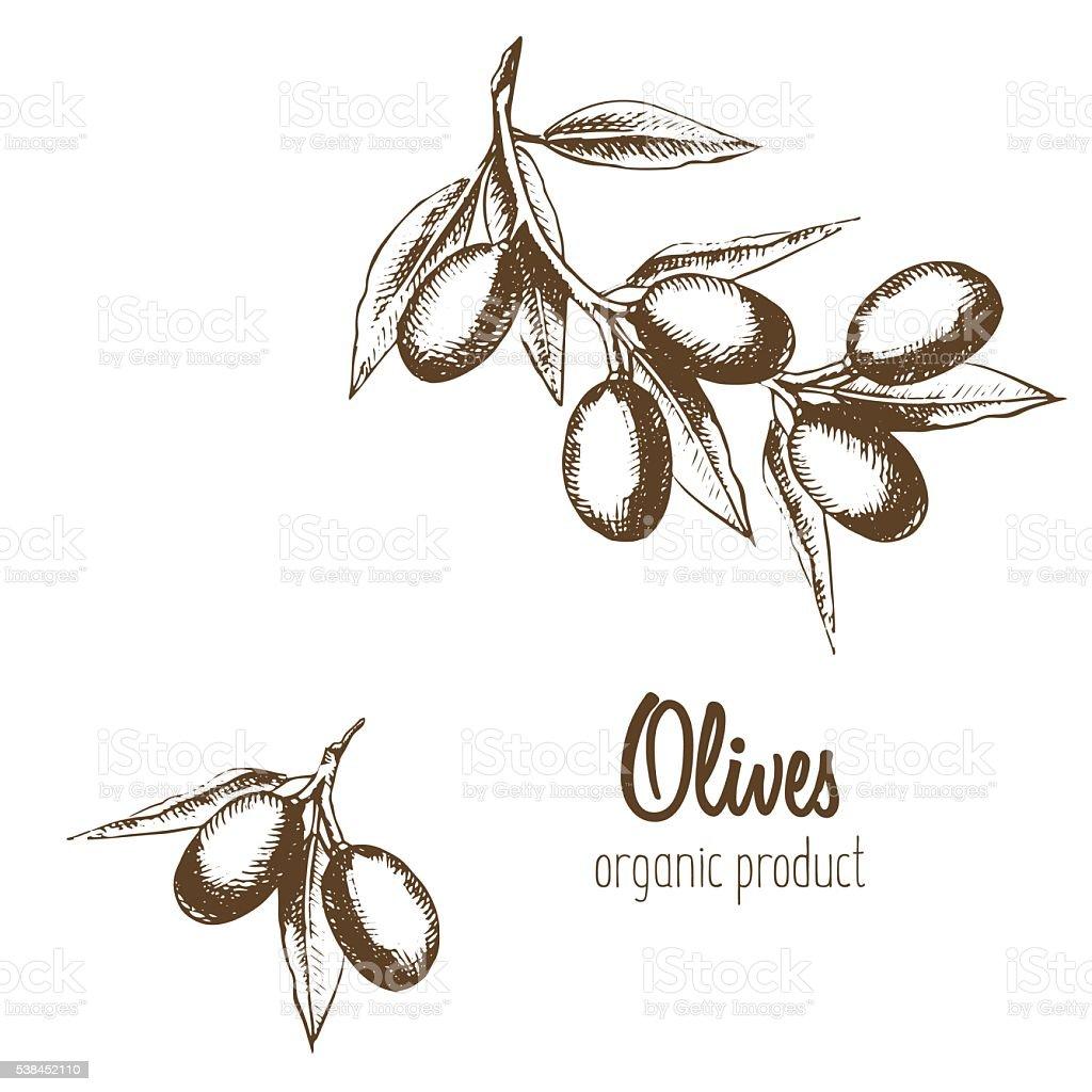 olives branche dolivier dans un style graphique dessin. Black Bedroom Furniture Sets. Home Design Ideas