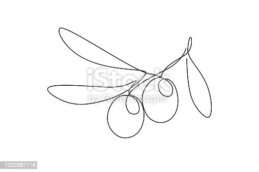 Olives in continuous line art drawing style. Minimalist black linear sketch on white background. Vector illustration