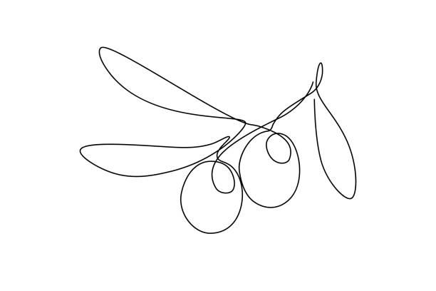 ilustrações de stock, clip art, desenhos animados e ícones de olives on olive tree branch - mediterranean food
