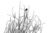 One Blackbird perched on bare branches.