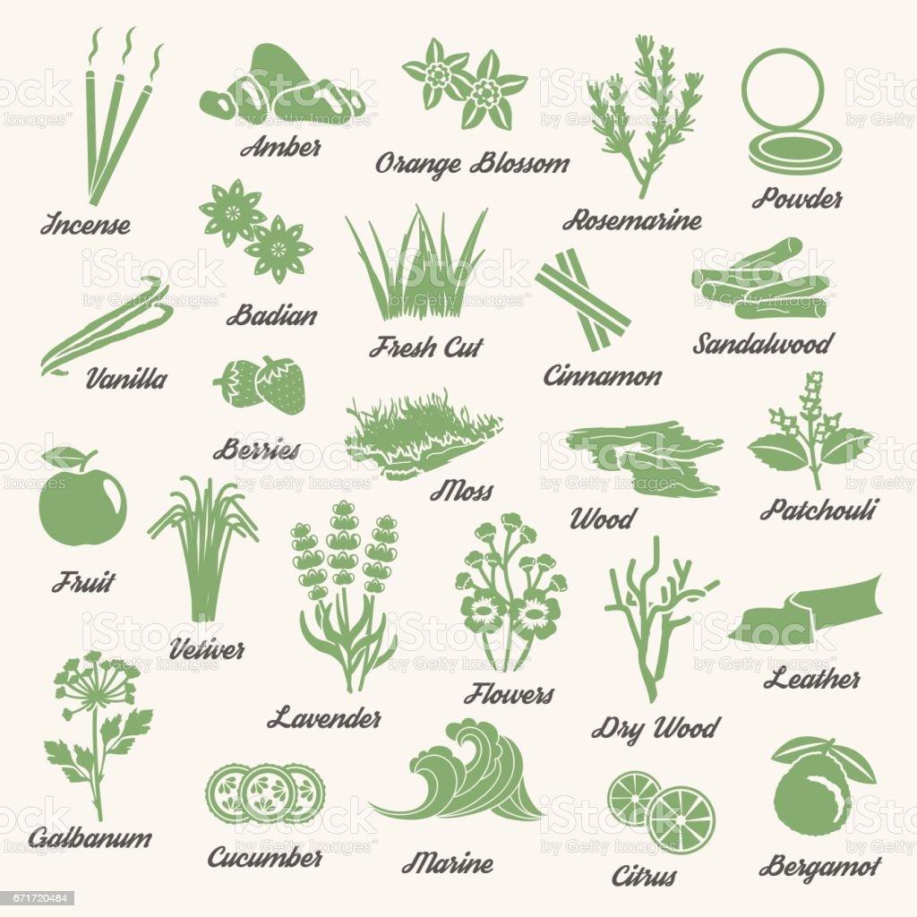 Ícones de ervas e plantas aromáticos uma cor - ilustração de arte em vetor