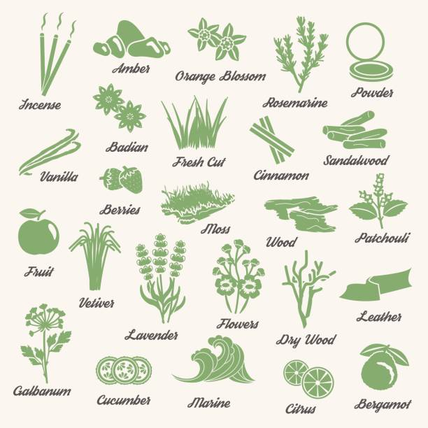 One color aromatic herbs and plants icons Collection of one color icons for aromatic plants, herbas and woods for essense oils production. Perfume fragrance aroma ingredients. moss stock illustrations