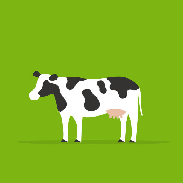 One cow in green background. One cow in green background, animal illustrations. domestic cattle stock illustrations