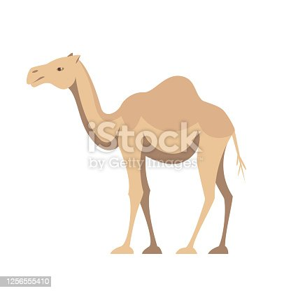istock One humped camel 1256555410
