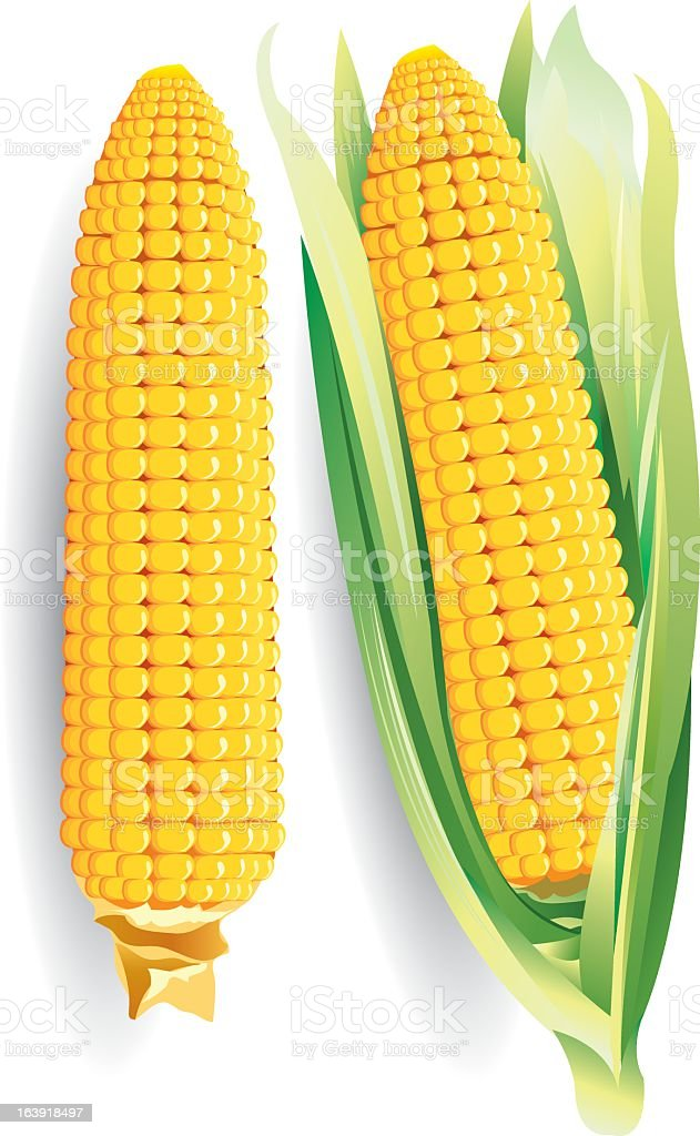 One husked and one unhusked ear of corn vector art illustration