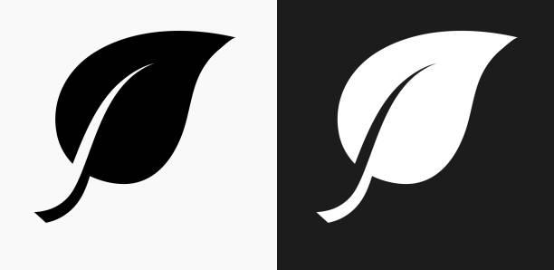 illustrazioni stock, clip art, cartoni animati e icone di tendenza di one leaf icon on black and white vector backgrounds - sustainability icons