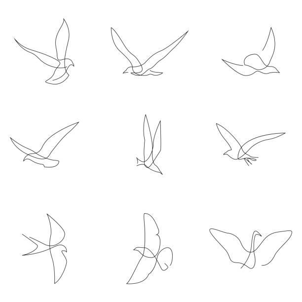 eine linie vogel-set. vögel sammlung. hand gezeichnete vektor-illustration - gans vogel stock-grafiken, -clipart, -cartoons und -symbole