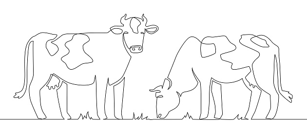 One line cows. Milk cow animal, livestock and beef meat and calf farm continuous line artwork vector concept. Illustration cow, farm mammal one line art