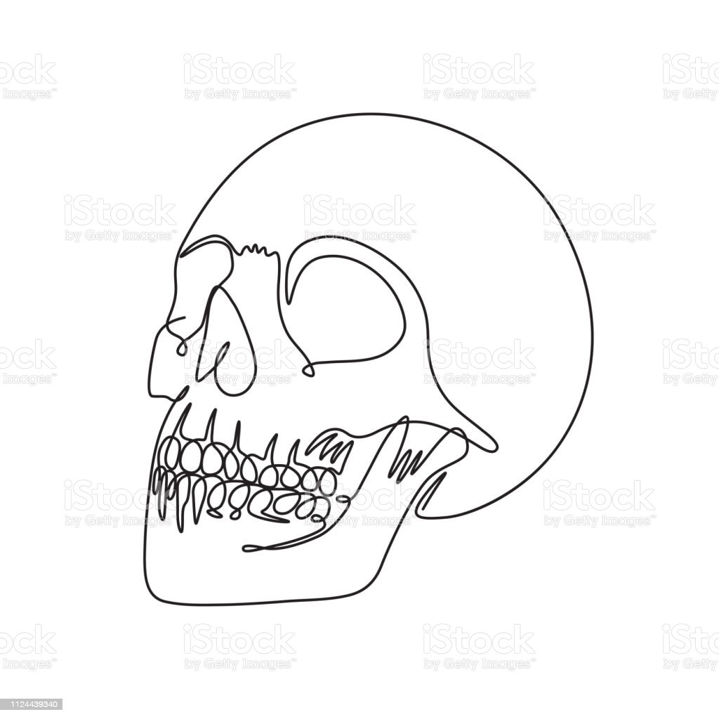One Line Drawing Perspective View Human Skull Vector