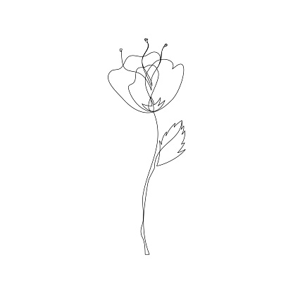One line poppy flower drawing.