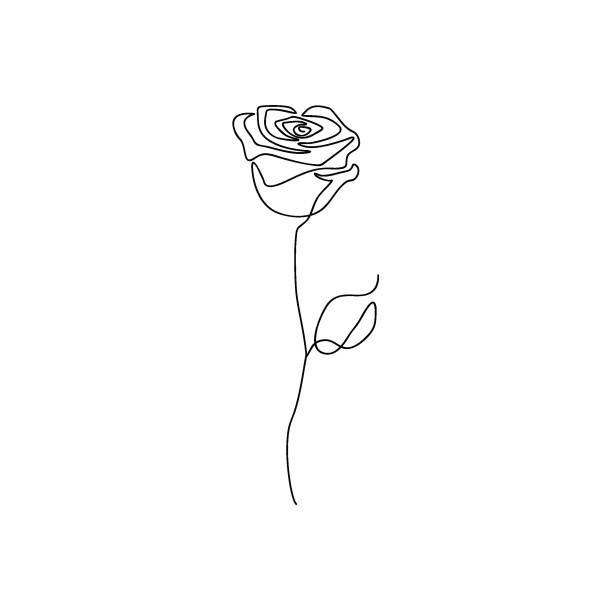 8 452 Rose Line Art Illustrations Royalty Free Vector Graphics Clip Art Istock Rose line art flower continuous one line art drawing vector minimalist design. 8 452 rose line art illustrations royalty free vector graphics clip art istock