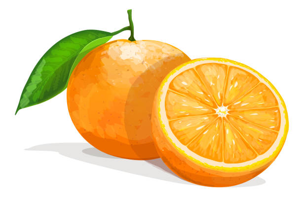 Bекторная иллюстрация One orange with half  isolated on white background. Vector illustration