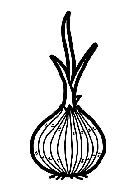 Best Plant Bulb Illustrations, Royalty-Free Vector ...
