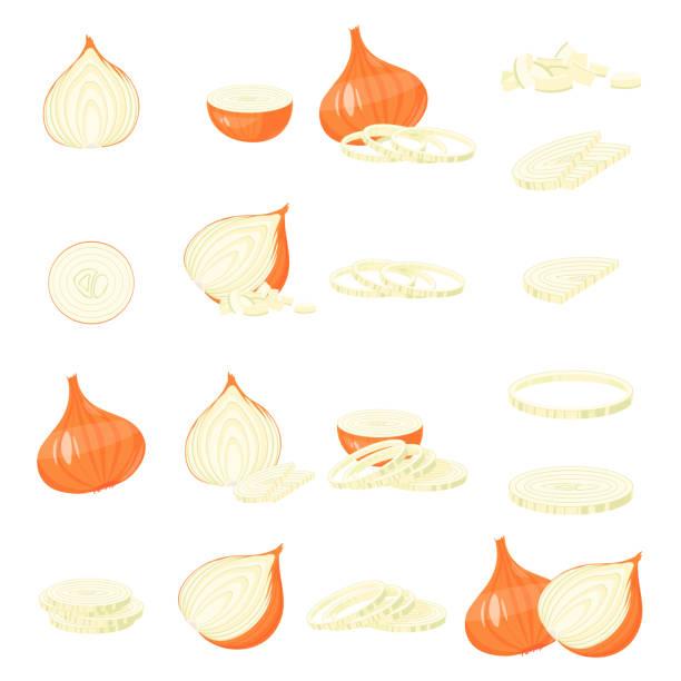 onion cartoon illustration isolated on white vector - onion stock illustrations