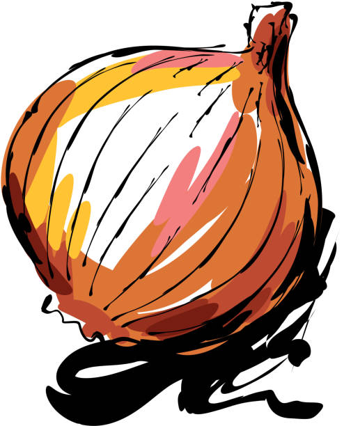 onion drawing - onion stock illustrations