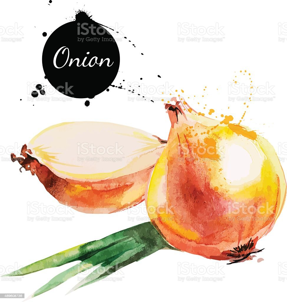 Onion. Hand drawn watercolor painting on white background. Vecto vector art illustration
