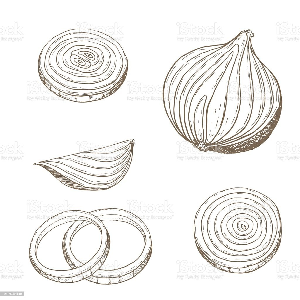 Onion  rings set vector art illustration