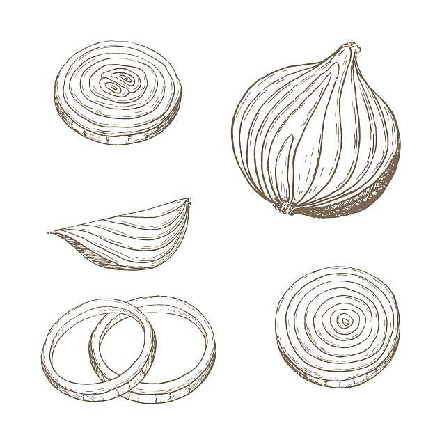 onion  rings set - onion stock illustrations